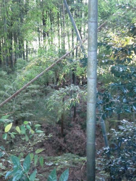 025郭Ⅱ北部土塁上から堀を見る