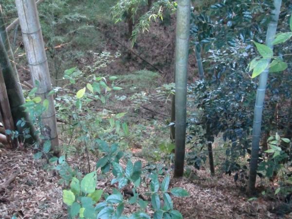 026郭Ⅱ北部土塁上から堀底を見る